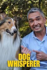 Dog Whisperer S7 Episode 4: Wolf-Dogs: Out of the Wild
